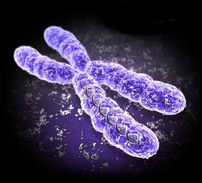 What are chromosome bands? Pet peeve included