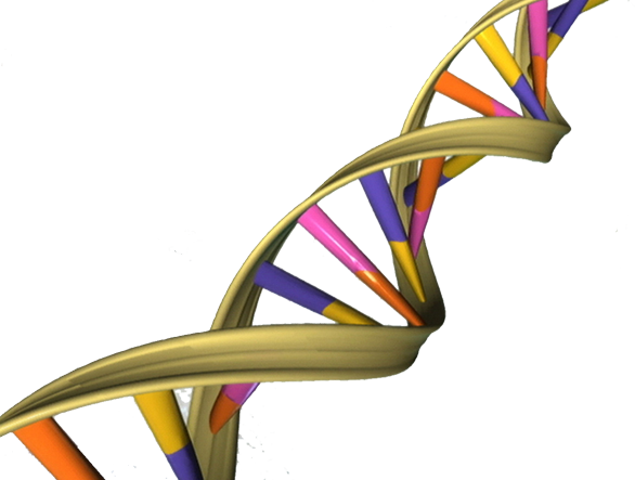 Genetic counselling should be non-directive