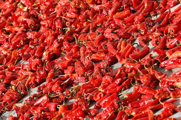Chilies drying in the sun